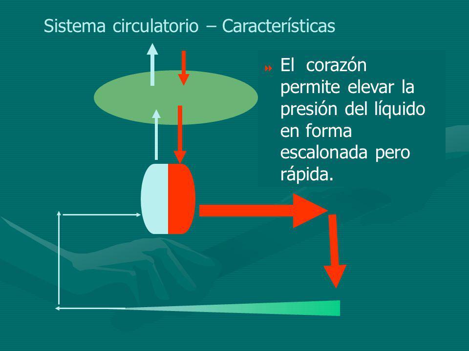 Sistema circulatorio – Características