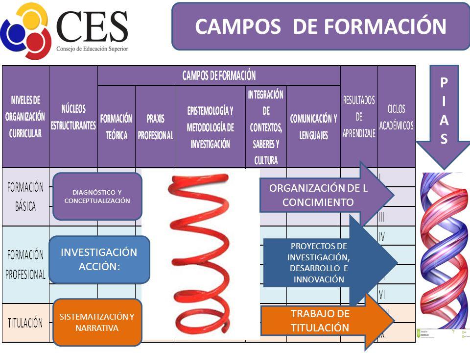 CAMPOS DE FORMACIÓN P I A S ORGANIZACIÓN DE L CONCIMIENTO