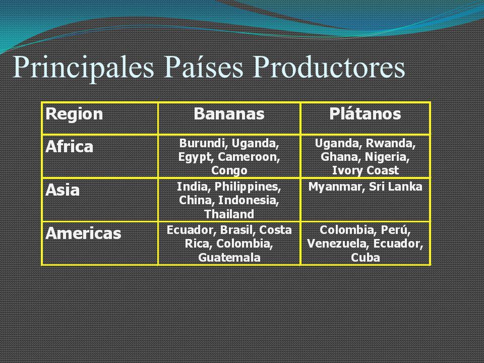 Principales Países Productores