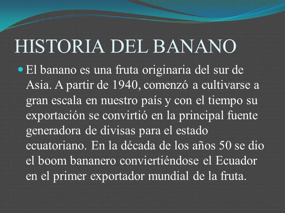 HISTORIA DEL BANANO
