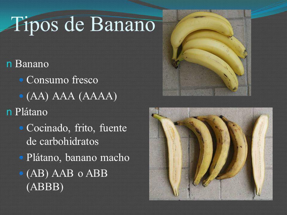 Tipos de Banano Banano Consumo fresco (AA) AAA (AAAA) Plátano