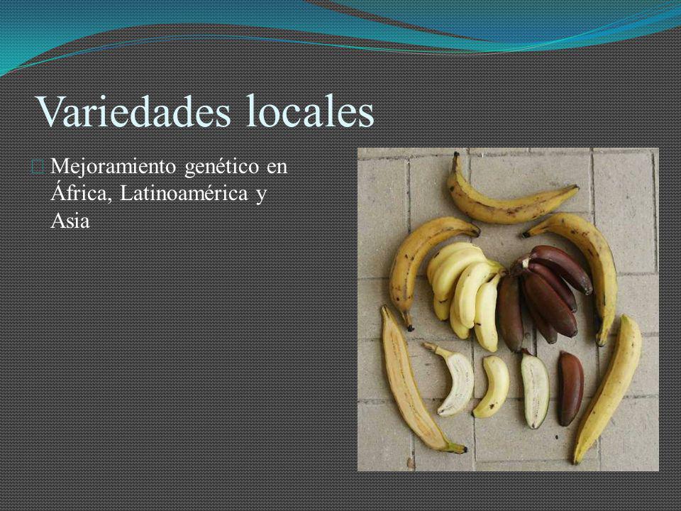Variedades locales Mejoramiento genético en África, Latinoamérica y Asia