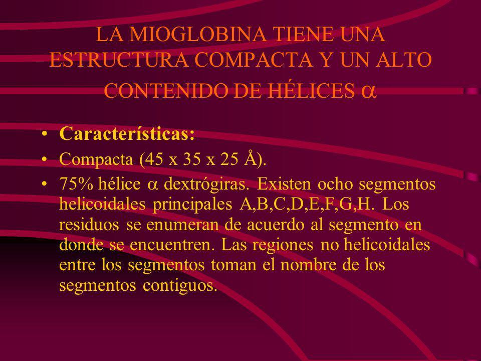 LA MIOGLOBINA TIENE UNA ESTRUCTURA COMPACTA Y UN ALTO CONTENIDO DE HÉLICES 