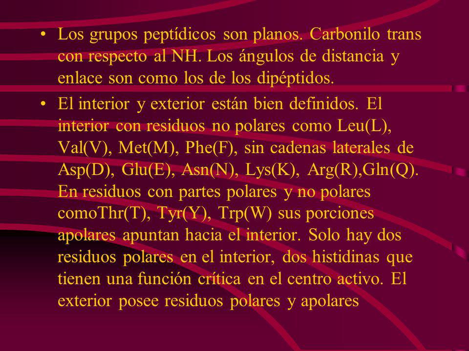 Los grupos peptídicos son planos. Carbonilo trans con respecto al NH