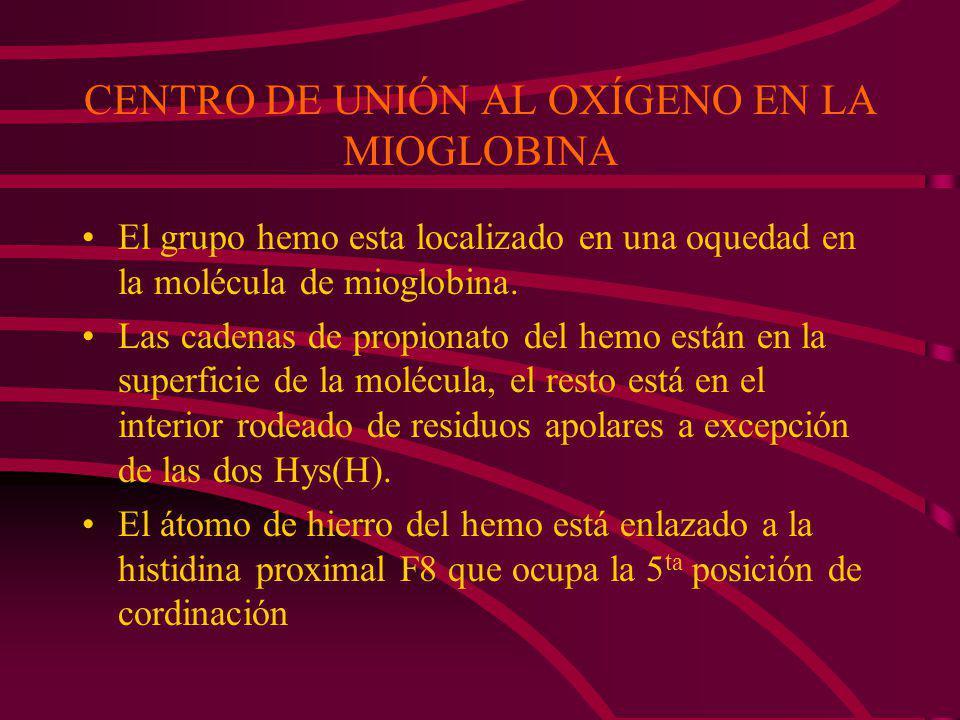 CENTRO DE UNIÓN AL OXÍGENO EN LA MIOGLOBINA