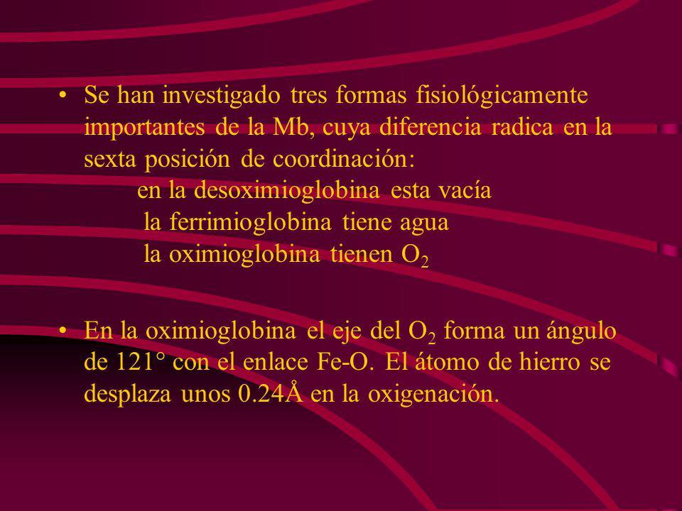 Se han investigado tres formas fisiológicamente importantes de la Mb, cuya diferencia radica en la sexta posición de coordinación: en la desoximioglobina esta vacía la ferrimioglobina tiene agua la oximioglobina tienen O2