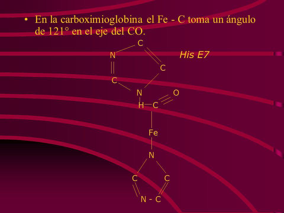 En la carboximioglobina el Fe - C toma un ángulo de 121° en el eje del CO.