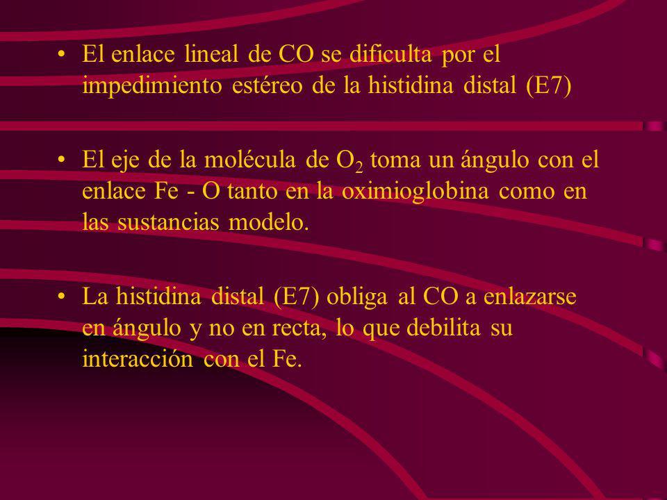 El enlace lineal de CO se dificulta por el impedimiento estéreo de la histidina distal (E7)