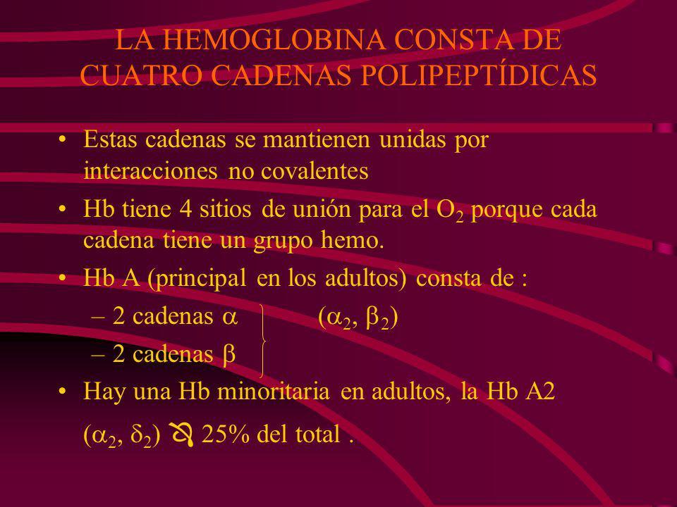 LA HEMOGLOBINA CONSTA DE CUATRO CADENAS POLIPEPTÍDICAS