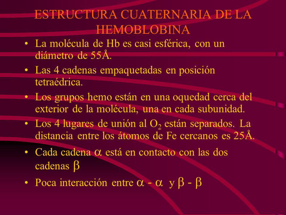 ESTRUCTURA CUATERNARIA DE LA HEMOBLOBINA