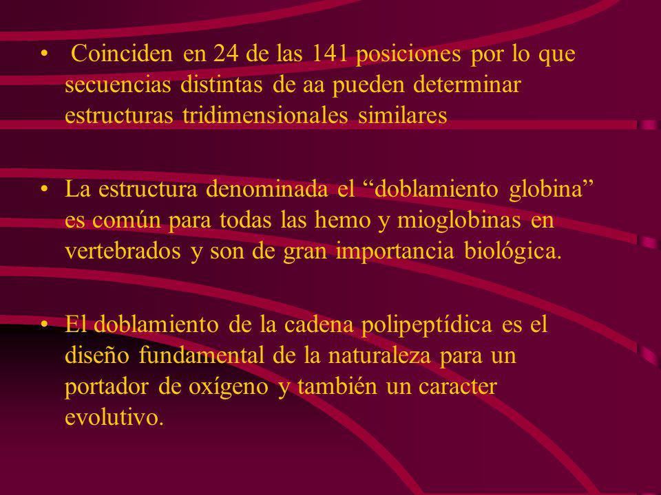 Coinciden en 24 de las 141 posiciones por lo que secuencias distintas de aa pueden determinar estructuras tridimensionales similares