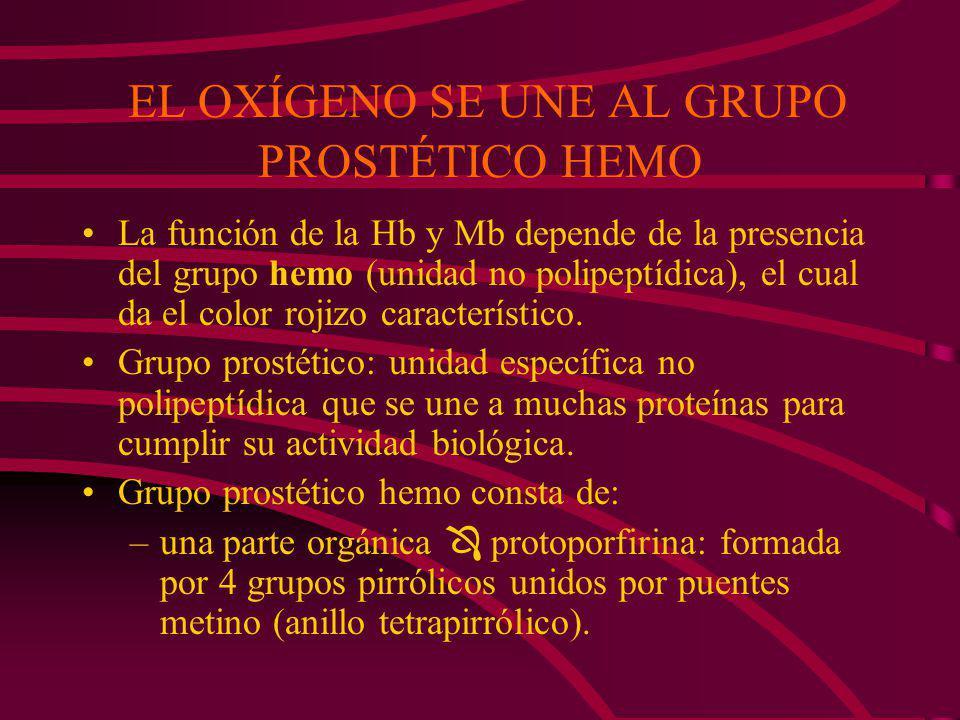 EL OXÍGENO SE UNE AL GRUPO PROSTÉTICO HEMO