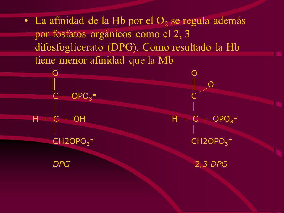 La afinidad de la Hb por el O2 se regula además por fosfatos orgánicos como el 2, 3 difosfoglicerato (DPG). Como resultado la Hb tiene menor afinidad que la Mb