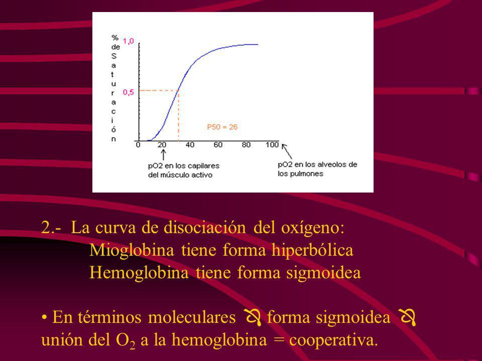 2.- La curva de disociación del oxígeno: