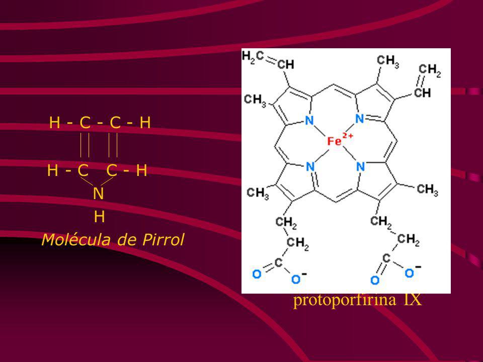 H - C - C - H H - C C - H N H Molécula de Pirrol protoporfirina IX