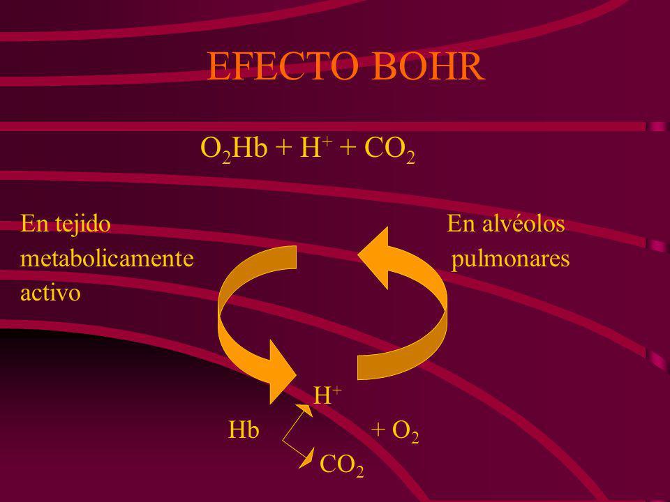 EFECTO BOHR O2Hb + H+ + CO2 En tejido En alvéolos
