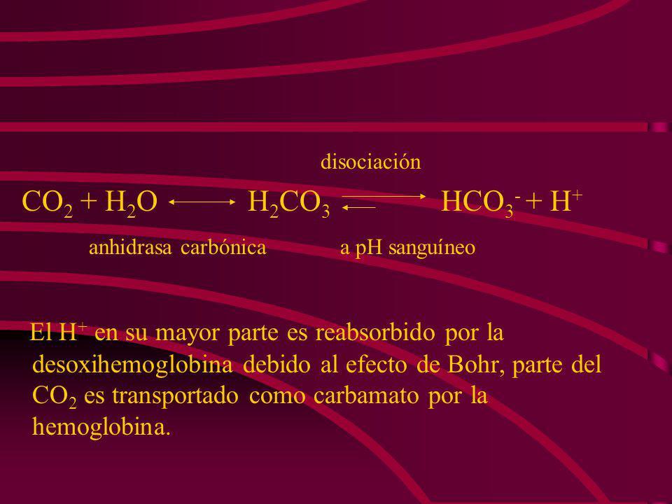anhidrasa carbónica a pH sanguíneo