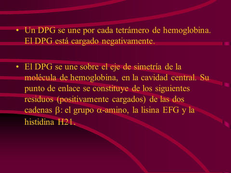 Un DPG se une por cada tetrámero de hemoglobina