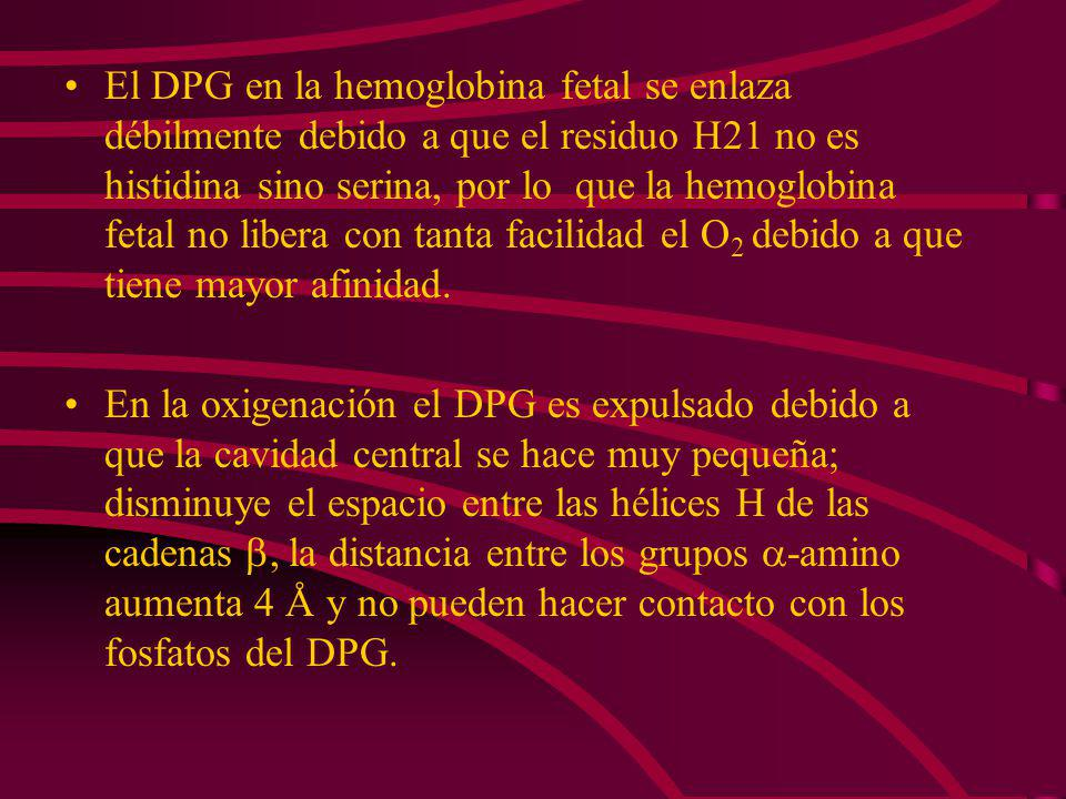El DPG en la hemoglobina fetal se enlaza débilmente debido a que el residuo H21 no es histidina sino serina, por lo que la hemoglobina fetal no libera con tanta facilidad el O2 debido a que tiene mayor afinidad.