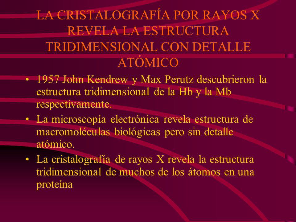 LA CRISTALOGRAFÍA POR RAYOS X REVELA LA ESTRUCTURA TRIDIMENSIONAL CON DETALLE ATÓMICO