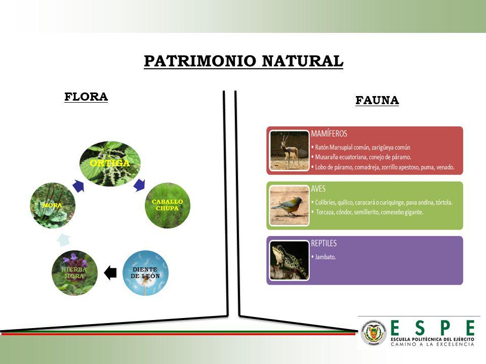 PATRIMONIO NATURAL FLORA FAUNA ORTIGA CABALLO CHUPA DIENTE DE LEÓN