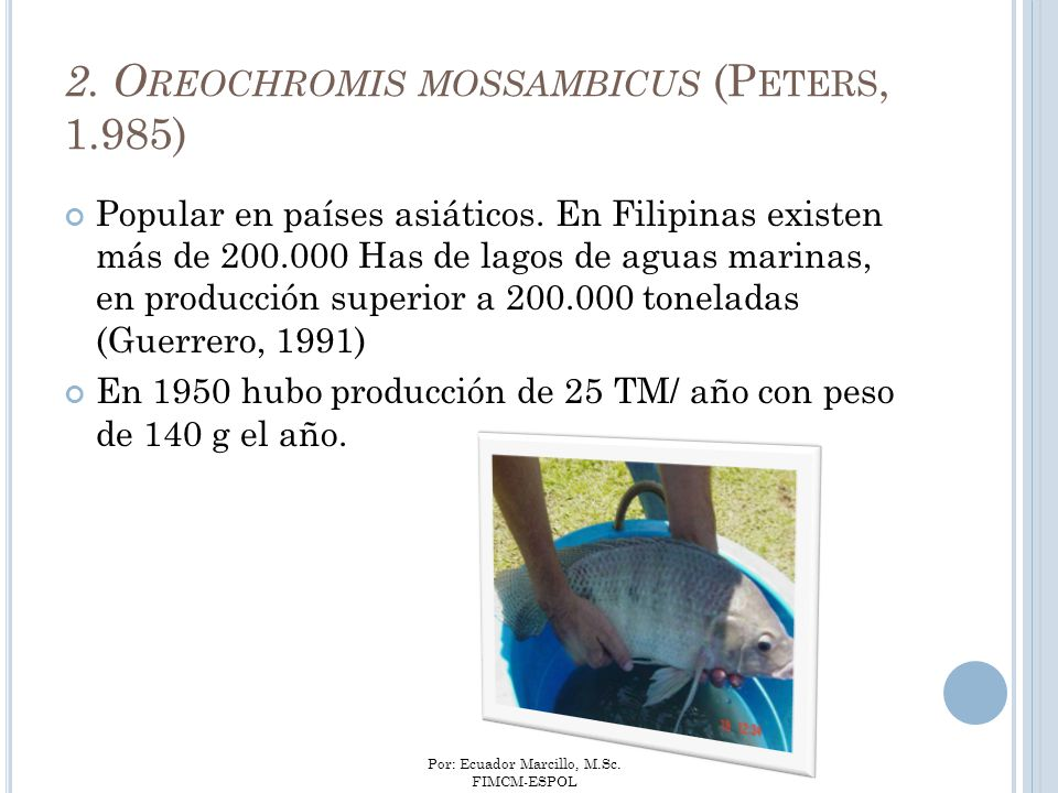 2. Oreochromis mossambicus (Peters, 1.985)