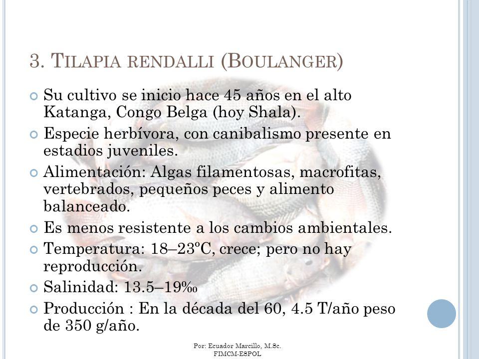 3. Tilapia rendalli (Boulanger)
