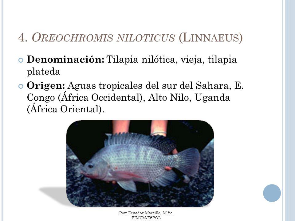 4. Oreochromis niloticus (Linnaeus)