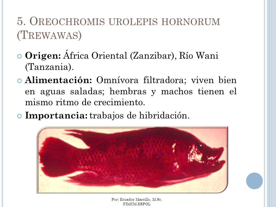 5. Oreochromis urolepis hornorum (Trewawas)