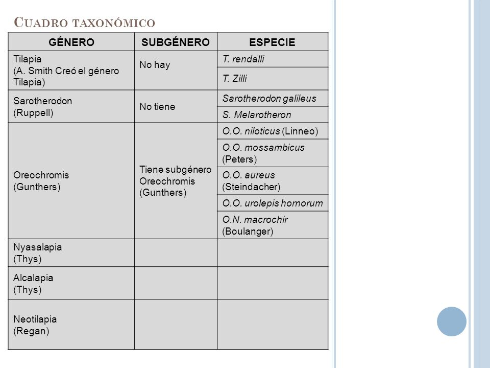 Cuadro taxonómico GÉNERO SUBGÉNERO ESPECIE Tilapia