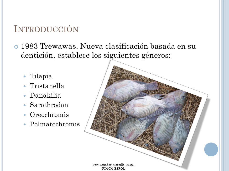 Introducción 1983 Trewawas. Nueva clasificación basada en su dentición, establece los siguientes géneros: