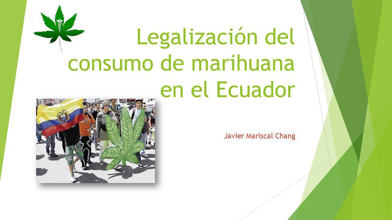 Legalización del consumo de marihuana en el Ecuador