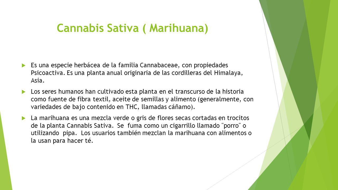 Cannabis Sativa ( Marihuana)