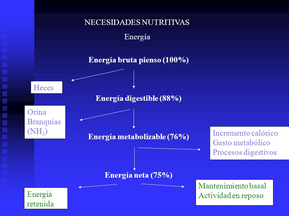 NECESIDADES NUTRITIVAS Energía