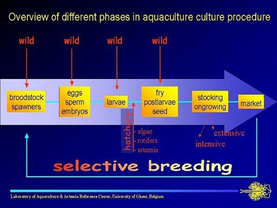 Diferentes fases en la producción acuicola: