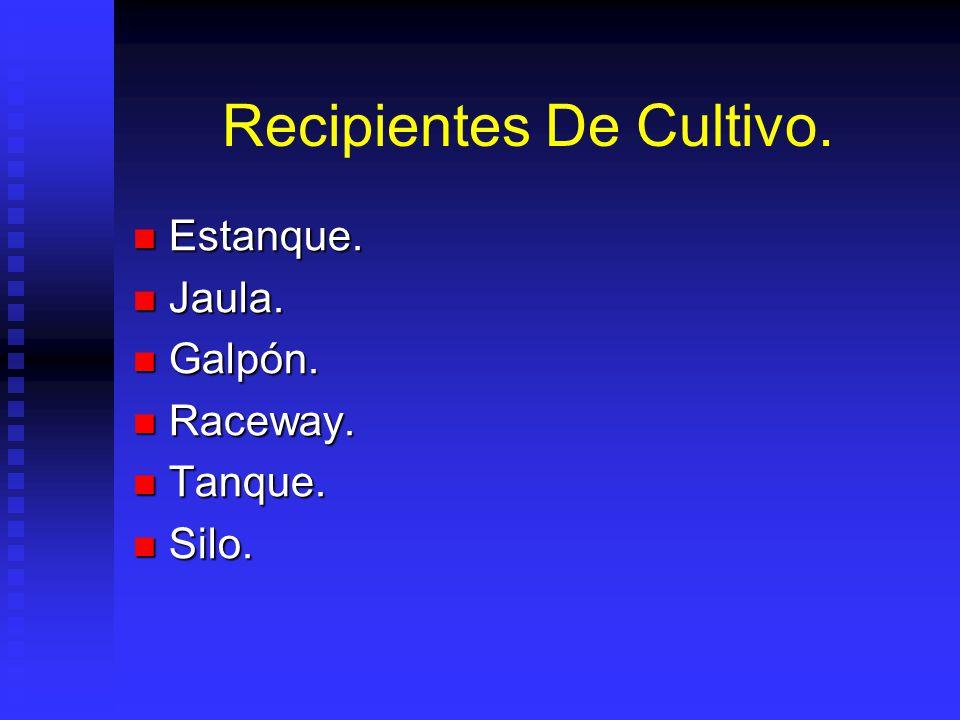 Recipientes De Cultivo.