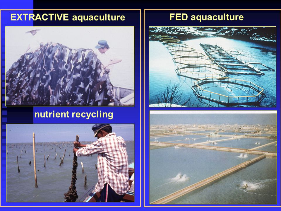 EXTRACTIVE aquaculture