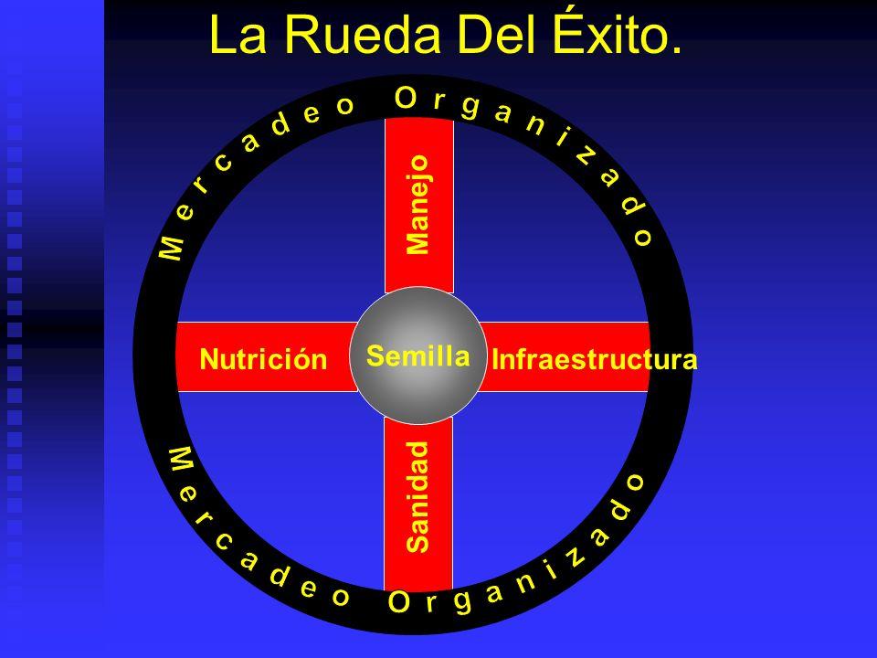 La Rueda Del Éxito. Semilla Infraestructura Nutrición Manejo Sanidad