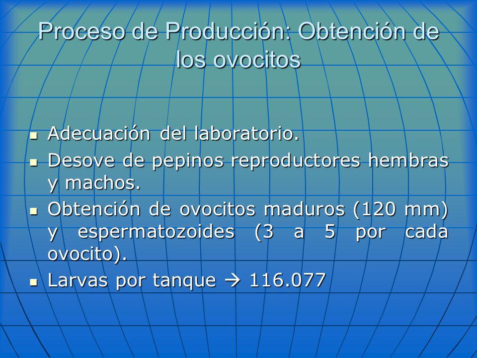 Proceso de Producción: Obtención de los ovocitos