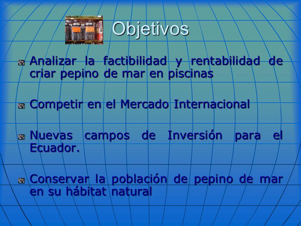 Objetivos Analizar la factibilidad y rentabilidad de criar pepino de mar en piscinas. Competir en el Mercado Internacional.