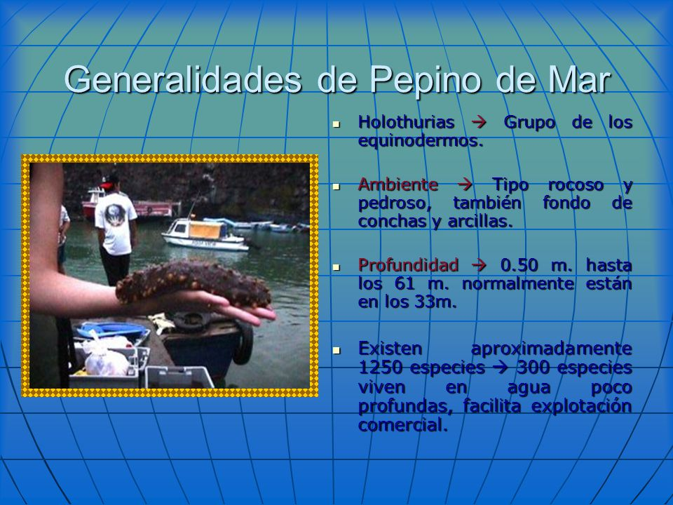 Generalidades de Pepino de Mar