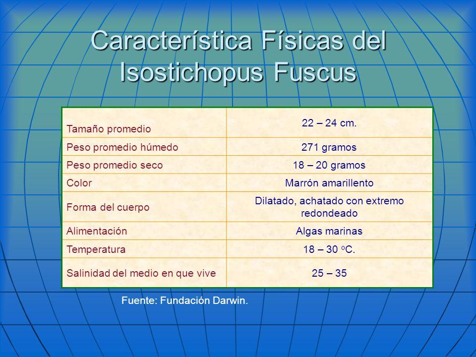 Característica Físicas del Isostichopus Fuscus