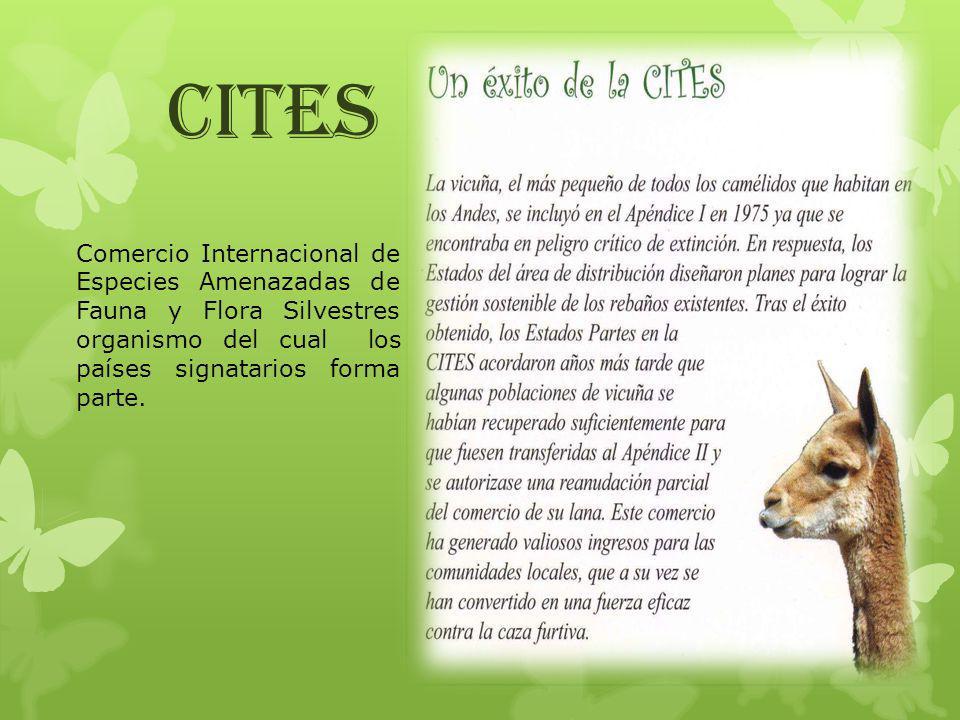 CITES Comercio Internacional de Especies Amenazadas de Fauna y Flora Silvestres organismo del cual los países signatarios forma parte.