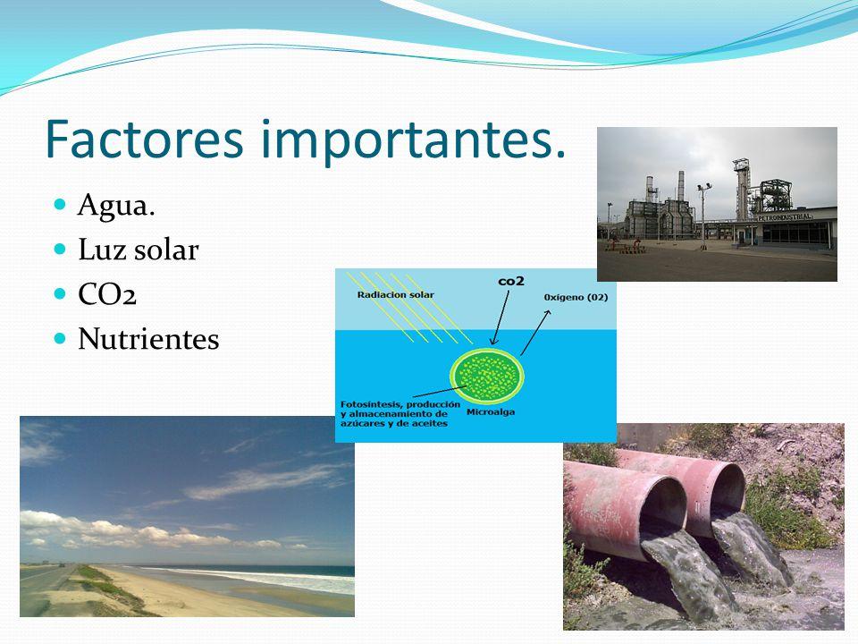 Factores importantes. Agua. Luz solar CO2 Nutrientes
