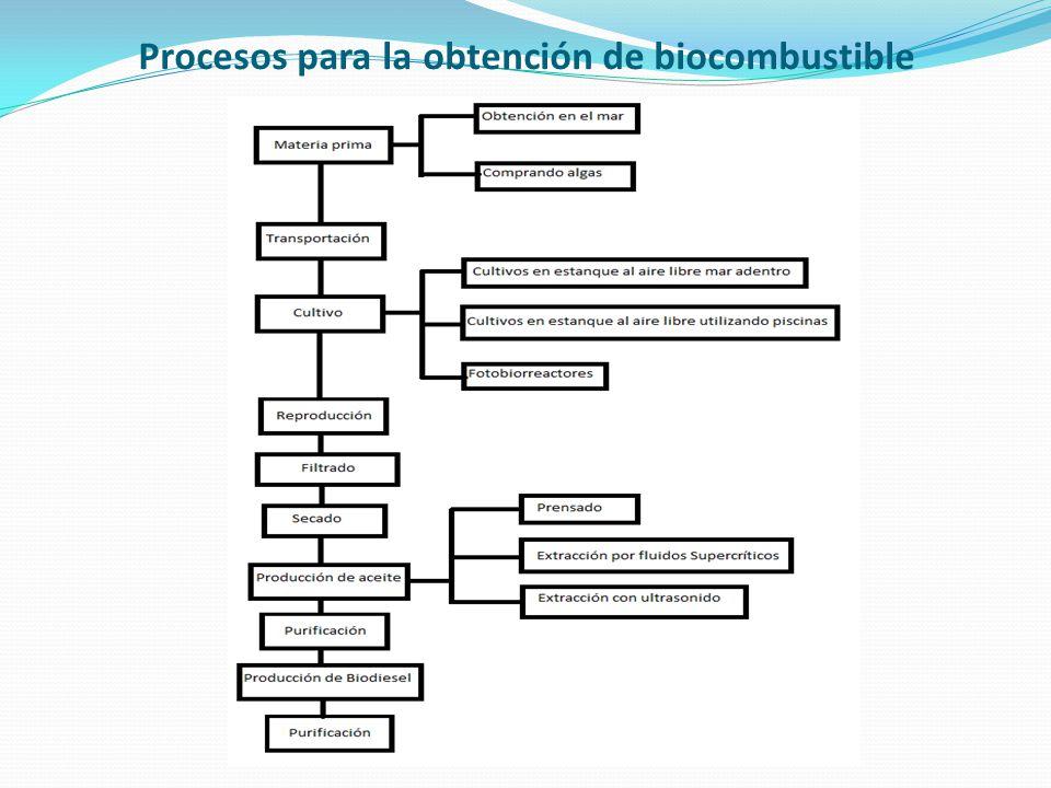 Procesos para la obtención de biocombustible