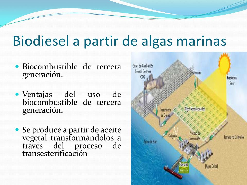Biodiesel a partir de algas marinas