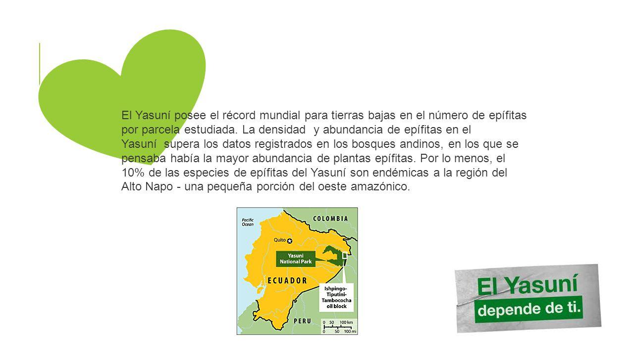 El Yasuní posee el récord mundial para tierras bajas en el número de epífitas por parcela estudiada.