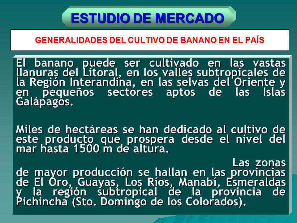 GENERALIDADES DEL CULTIVO DE BANANO EN EL PAÍS