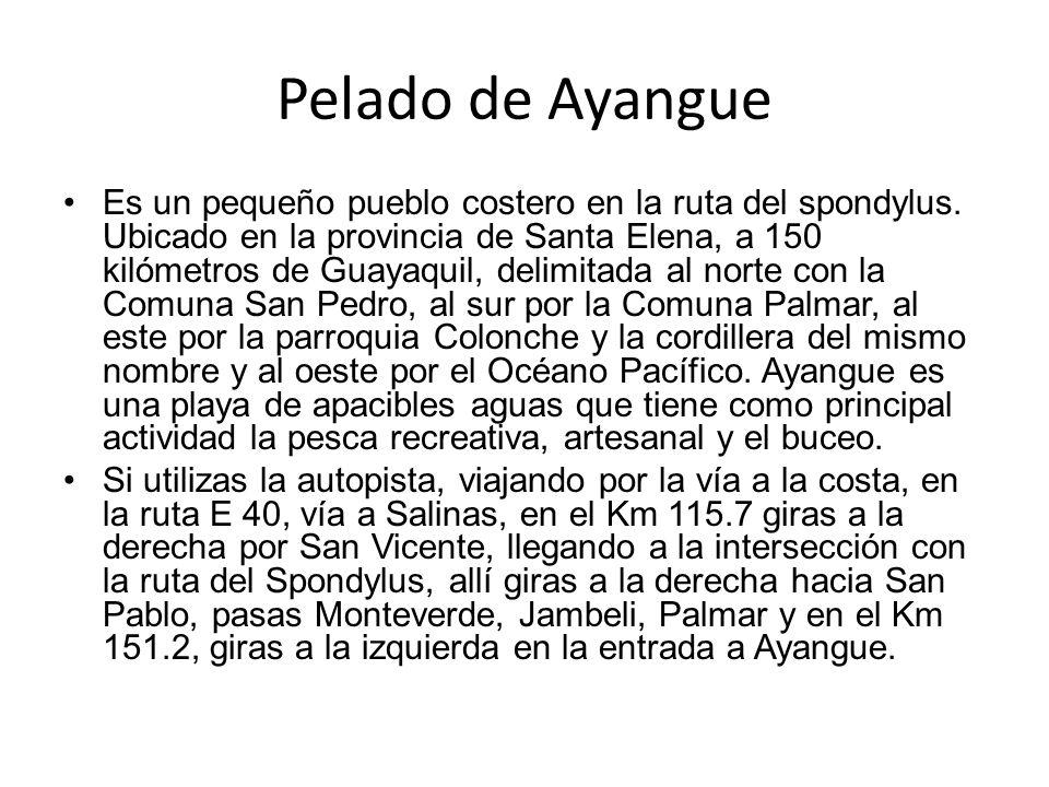 Pelado de Ayangue