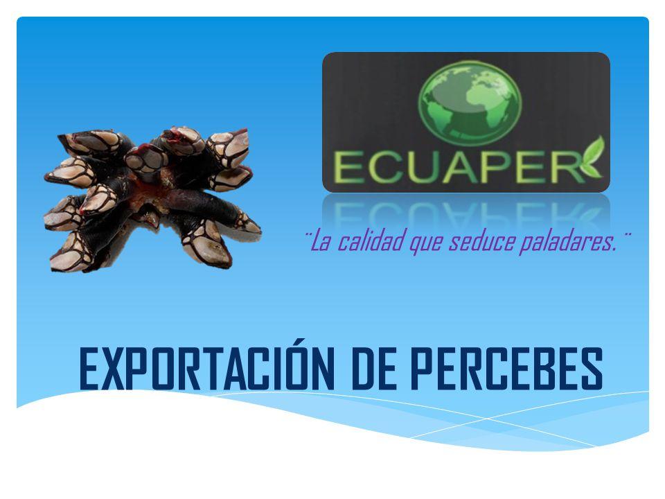 EXPORTACIÓN DE PERCEBES